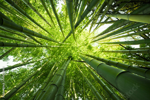 Poster Bamboe Green bamboo nature backgrounds