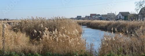 Fotografie, Obraz  Autumn golden thicket of sedge on the creek banks.