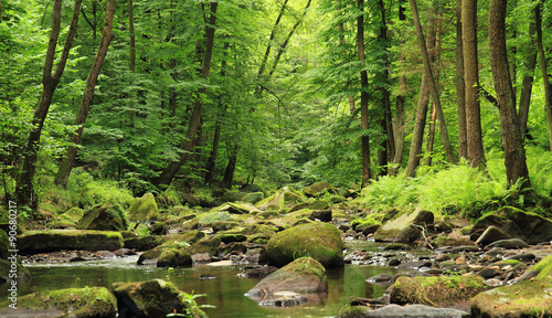 Montage in der Fensternische Fluss river in the spring forest