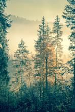 Wild Forest In Autumnal Season Time, Vintage Style Toned