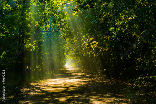 Aluminium Prints Road in forest las ciemny
