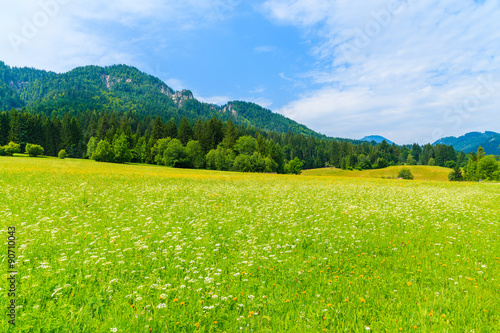 Poster Lime groen Green meadow with summer flowers in Alps Mountains, Weissensee lake, Austria