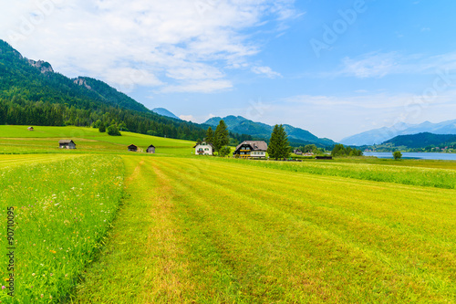 Poster Lime groen Green field in summer landscape of Alps Mountains, Weissensee lake, Austria