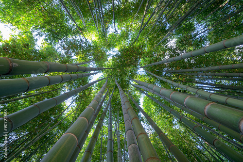 Foto auf Leinwand Bambusse Bamboo forest, a look to the sky