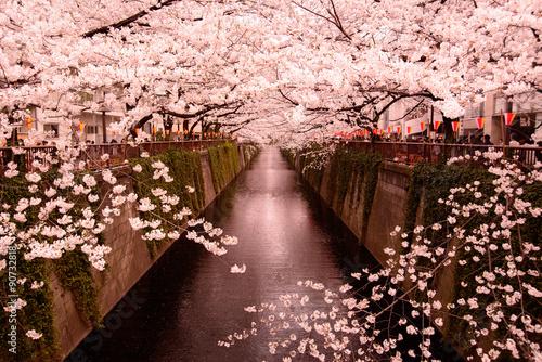 Foto op Plexiglas Kersen 目黒川の桜