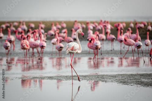 Foto op Aluminium Flamingo Flamingos in Wallis Bay, Namibia, Africa