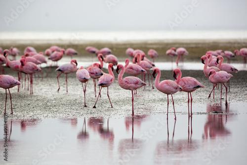 Flamingos in Wallis Bay, Namibia, Africa #90741891