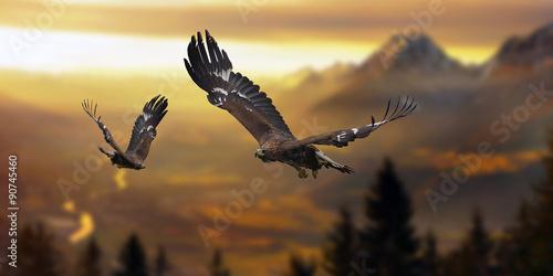 Photo sur Toile Aigle Steinadler im Flug