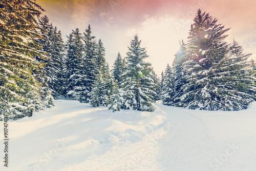 zimowy-krajobraz-osniezone-drzewa-w-szwajcarskich-alpach-filtrowane