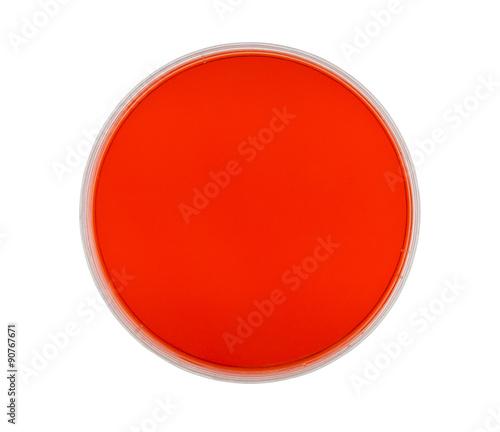 Photo Petri Dish with Red Agar