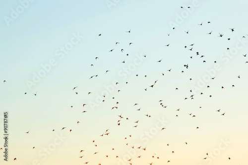Foto op Canvas Vogel Silhouettes of birds in the sky