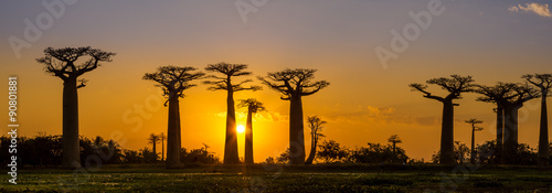 Spoed Foto op Canvas Afrika Panorama view at sunset above Baobab avenue