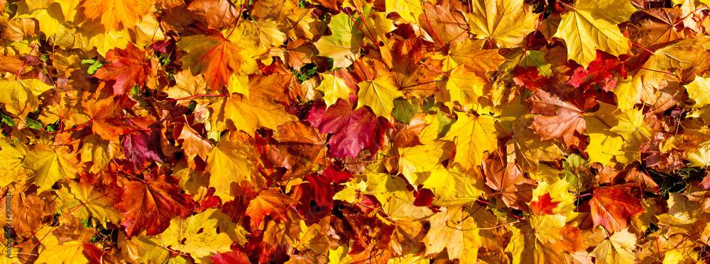 Fototapety, obrazy: Bunte Herbstblätter - Panoramaformat