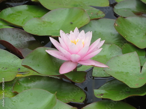 Photo Stands Water lilies Seerose