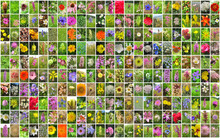 Flowers Collage.
