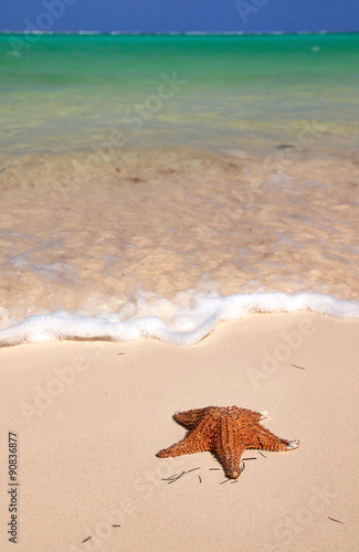 Staande foto Oceanië Starfish on caribbean sea