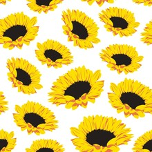 Seamless Pattern With Sunflowers On White Background. Vector Eps 8