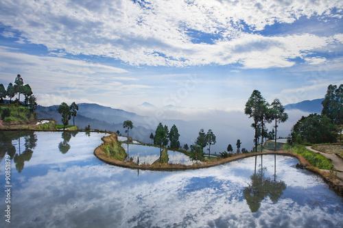 Foto auf Gartenposter Reisfelder Rice fields on terraced in surice