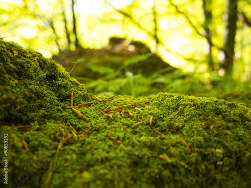 Fotografie, Obraz  green moss in autumn forest