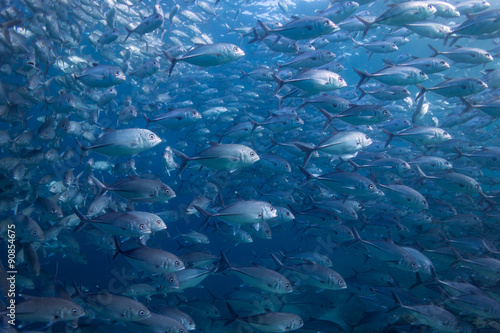Sea of Fish