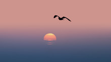In Flight Seagull At Sunset