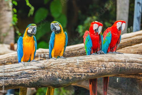 Naklejki papugi  kolorowe-papugi-ara-ptak