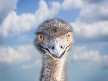 Head Of An Emu