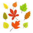 Colorful autumn leaves set. vector illustrations