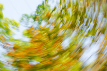 Rotation Of Colourful Leaves