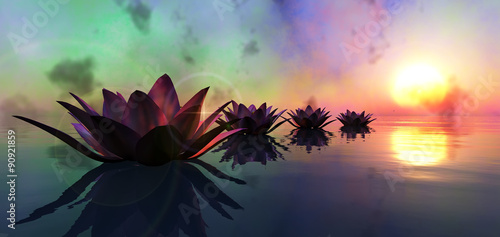 Aluminium Prints Water lilies water lily floating