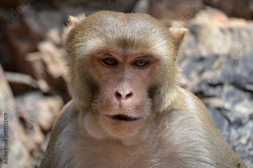 In de dag Monkey