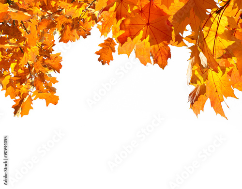 Foto op Canvas Herfst fallen leaves in autumn forest