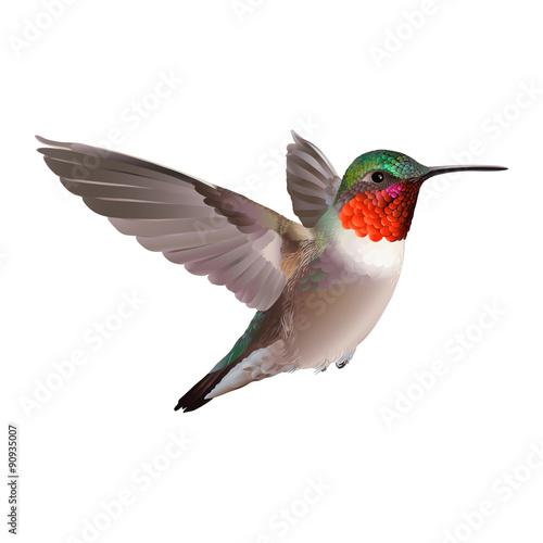 Fotografia, Obraz Hummingbird - Colubris archilocus