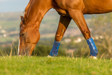 Horse Eating Grass In Field