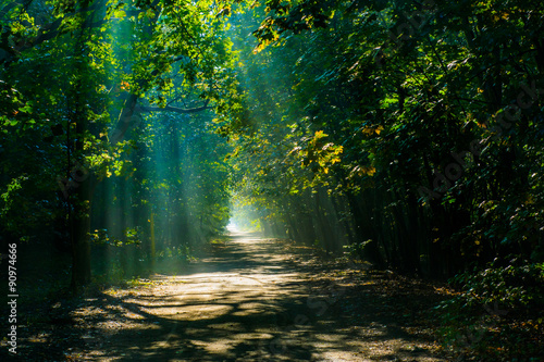 Tuinposter Weg in bos shadows in the forest