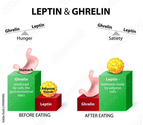 Fotografie, Tablou  ghrelin and leptin