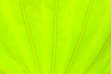 Light Green Leaf Abstract Nature Background, Blooming Light Blurred