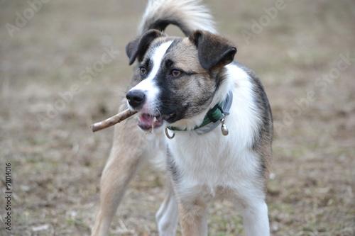 Foto  Mischlingshund