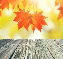 Naklejka na ściany i meble Autumn maple leaves