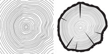 Sawcut Tree Trunk And Tree-rings Background