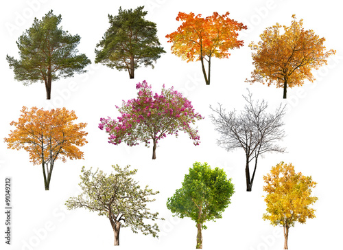 Photo  collection of ten isolated trees