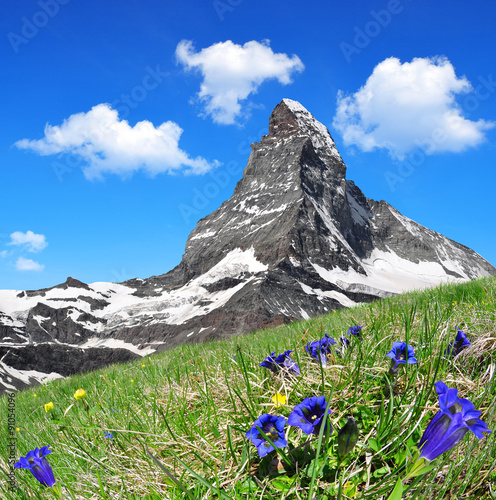 Fotobehang Alpen Matterhorn in the foreground blooming gentian, Pennine Alps, Switzerland