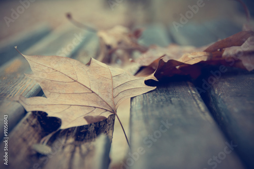 Dead leaves on bench Wallpaper Mural