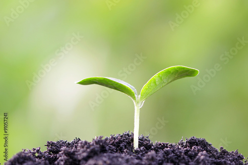 Tuinposter Planten Growing plant