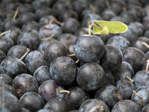 Valokuva  Pile of Sloe,Prunus spinosa - blackthorn
