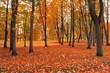 Autumn park in foggy weather - beautiful autumn landscape