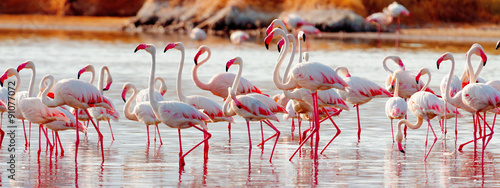 Photo sur Toile Flamingo Flamingos near Bogoria Lake, Kenya