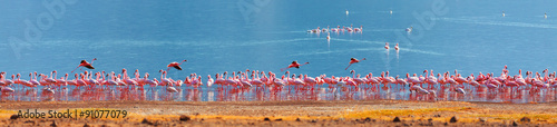 Photo sur Toile Flamingo Flamingos on Bogoria Lake