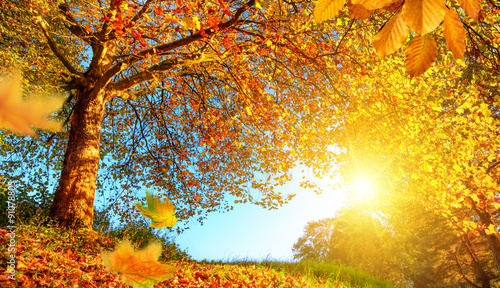 Fotobehang Oranje eclat Golden autumn scenery with lots of sunshine