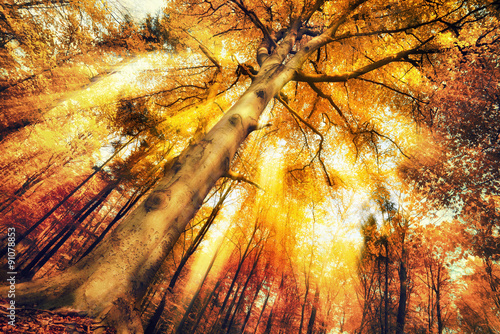 Photo  Enchanting forest scenery in autumn
